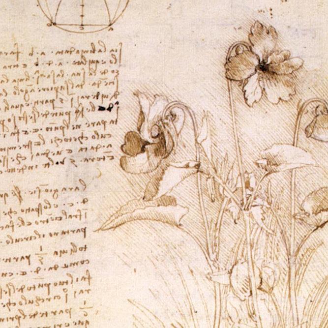 Carnet de croquis botanique de Leonard de Vinci